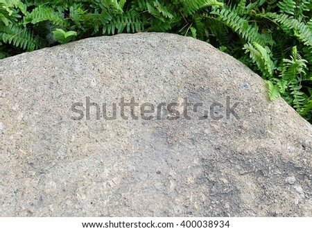 Garden and Plant, Brown Stone in The Garden Decorate with Green Plants. - stock photo