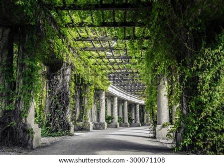 Garden archway in bloom - pergola, Wroclaw, Poland - stock photo