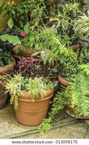 Garden arrangement of ornamental foliage in spring - stock photo