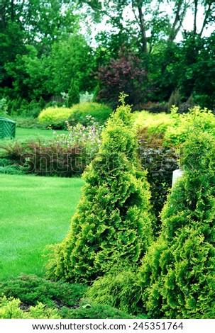 garden arrangement with coniferous shrubs - stock photo