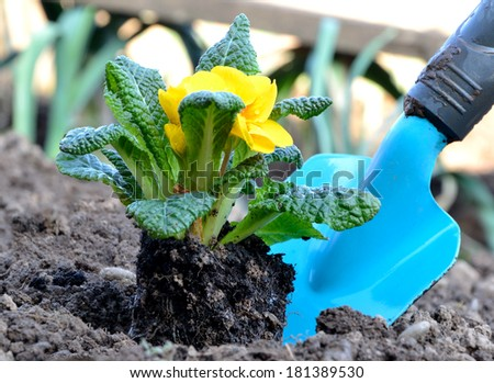 Garden bed with flower and tool - stock photo