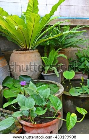 Garden behind the house - stock photo