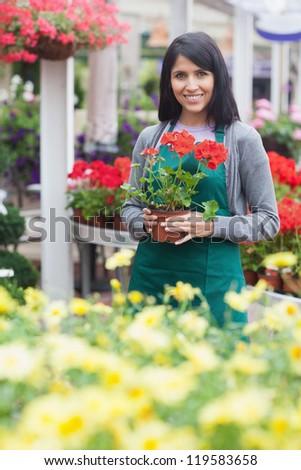 Garden center worker holding a red flower in garden centre - stock photo