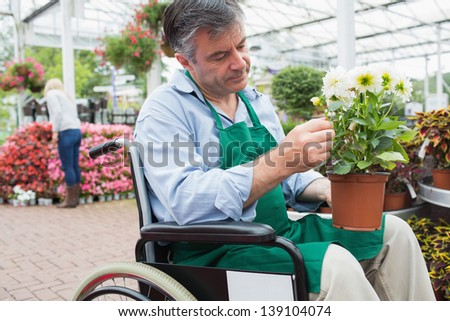 Garden center worker in wheelchair holding potted plant in greenhouse in garden center - stock photo