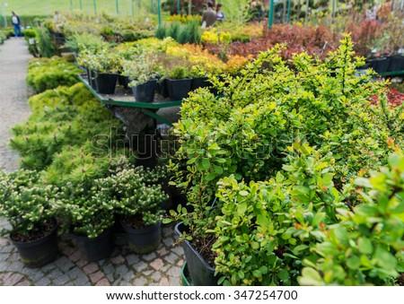 Garden centre, plant nursery - stock photo