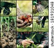 Garden. Collage of spring gardening work. Herbs and vegetables - stock photo