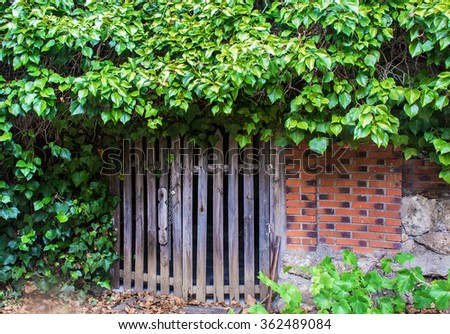 Garden corner whit wooden doors and green leaves - stock photo