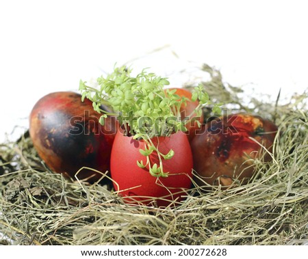 Garden cress in an easter egg shell - stock photo
