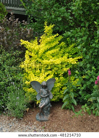 Garden design featuring angel statuary and golden leaved barberry bush