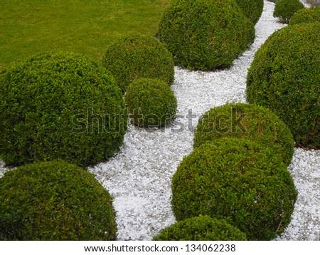 garden detail with box trees and white gravel - stock photo
