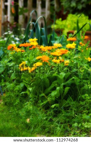 Garden dreams in summer time - stock photo