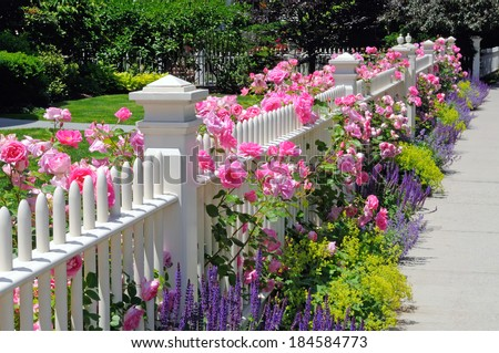Garden fence with pink roses, sage, speedwell and catmint