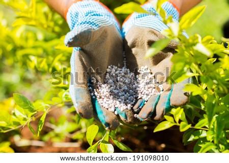 garden fertilizer on gardeners hand - stock photo
