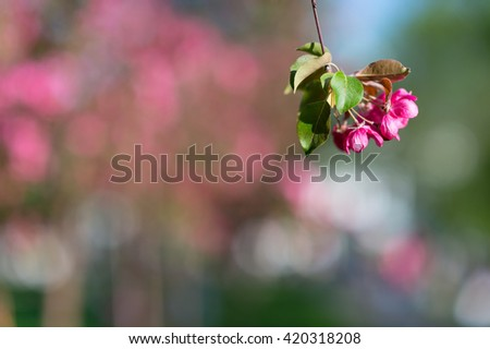 Garden flower background. Awesome view of blooming apple tree in garden. Garden flower. Garden. Garden view. Red garden. Garden. Nice garden. Garden beauty. Home garden Garden apple tree Spring garden - stock photo