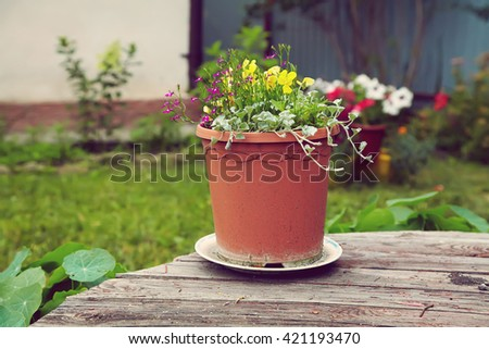 garden flowers in a ceramic pot on a wooden rustic background - stock photo