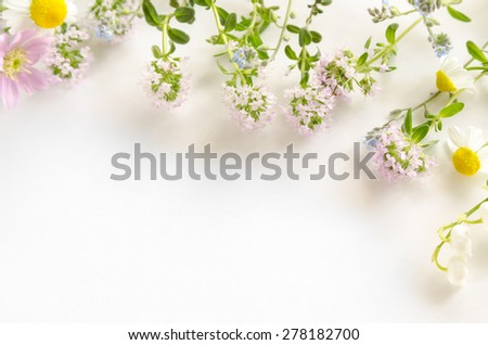 garden flowers, thyme and chamomile on white background