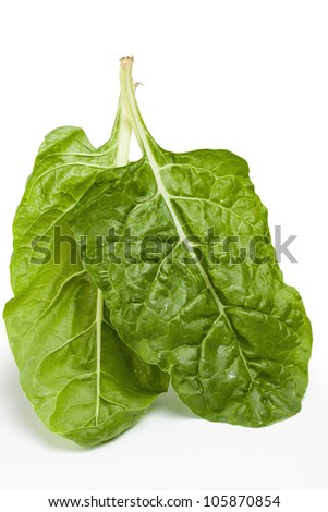 Garden fresh Swiss chard (silverbeet) leaves - stock photo