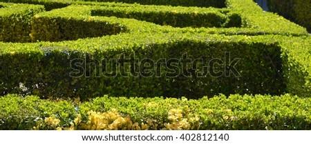 Garden Hedge Stock Images RoyaltyFree Images Vectors