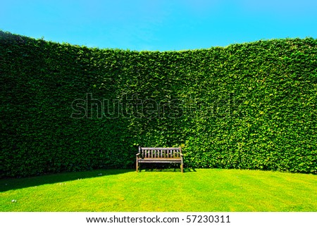 Garden hedges with a wooden bench - stock photo