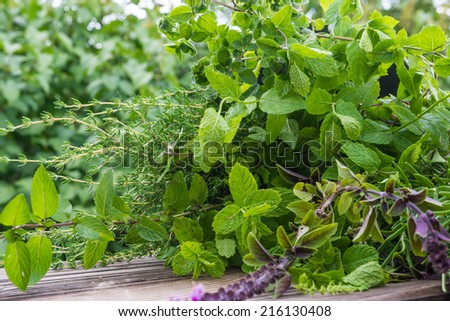 Garden herbs, medicinal plants  - stock photo