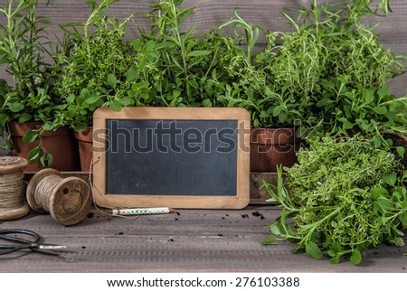 Garden herbs with chalkboard and vintage scissors. Food  ingredients rosemary, thyme, oregano - stock photo