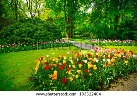 Garden in Keukenhof, tulip flowers and trees on background in spring. Netherlands, Europe. - stock photo