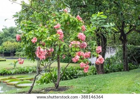 Garden in Suan Luang Rama 9 public park, Thailand - stock photo