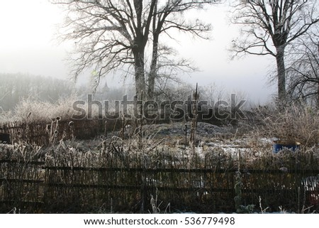 Garden in the winter, covered with frost. Natural fenced garden fence made of willow and hazel rods. English oaks, Quercus robur, covered with frost in the winter countryside.