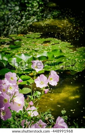Garden Little Pond and Pink Flowers Around it - stock photo