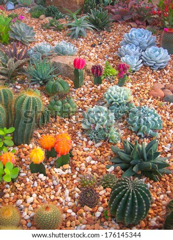 Garden of cactus and succulent , Thailand - stock photo