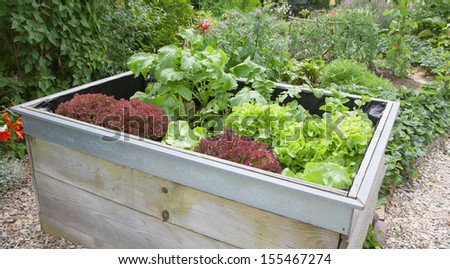 Garden plants growing in wooden box - stock photo