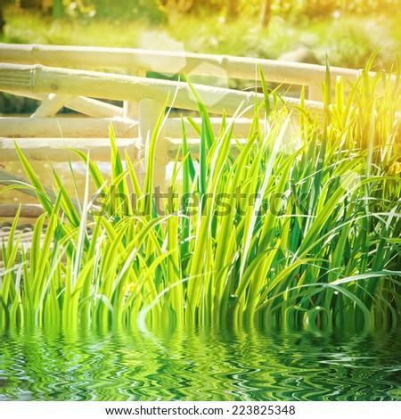 garden pond  - stock photo