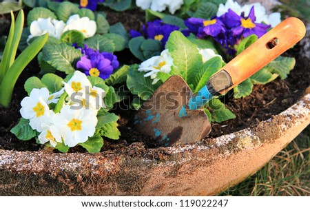 Garden pot with primrose flower and little shovel