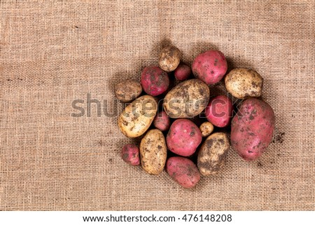 Garden potatoes with soil and roots on burlap cloth