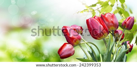 Garden red tulips.Spring Time background