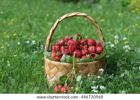 Garden scene with fresh ripe red strawberry in wicker basket on a green grass background, lawn. Image for calendar. Sunny summer day, outdoor and space, real light and shadows - stock photo