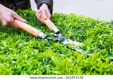 garden scissors with someone trimming bushes in spring - stock photo