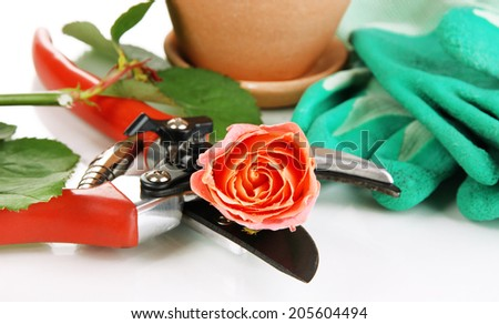 Garden secateurs and rose isolated on white - stock photo