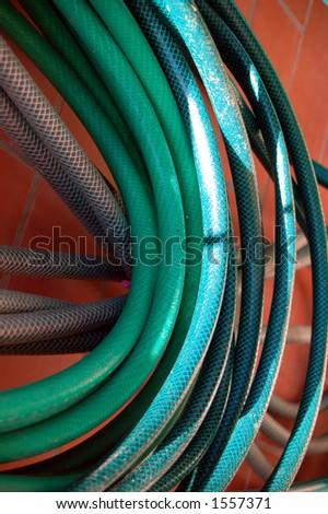 garden serpent - stock photo