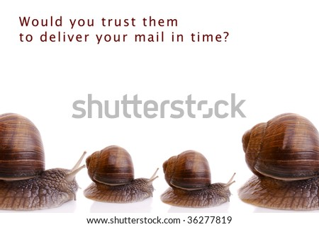 Garden snails isolated on white background.