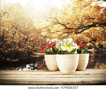garden tools and autumn background of golden leaves