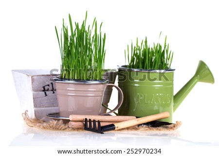 Garden tools and grass in pots isolated on white  background. Gardening concept.  - stock photo