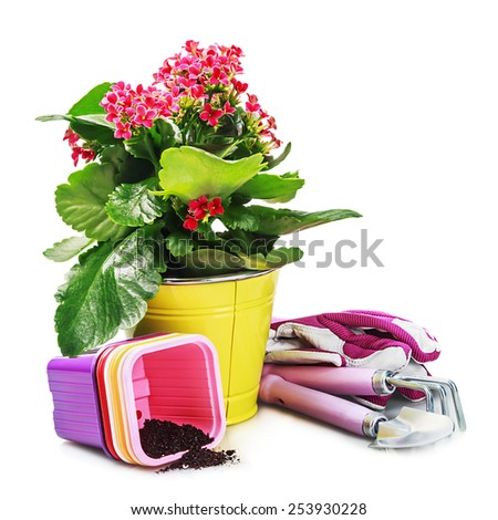 garden tools with flowers isolated on white background. focus on tools