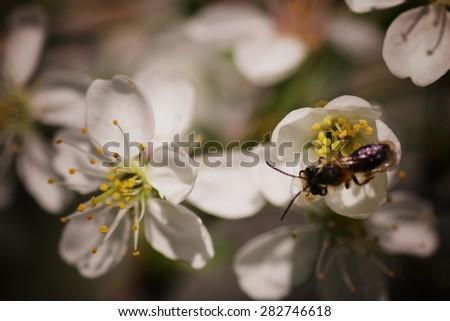 garden trees in bloom macro sunset - stock photo