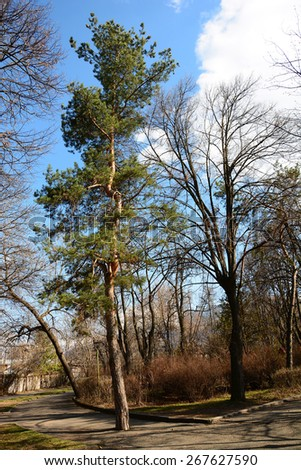 Garden trees in spring - stock photo
