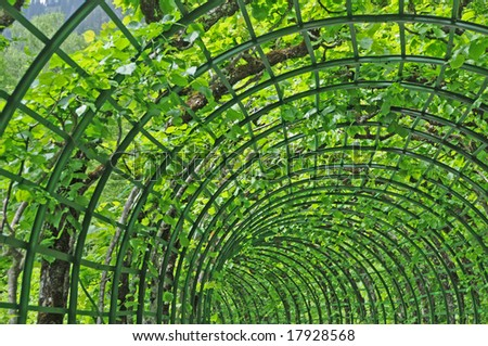 Garden Trellis - stock photo