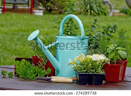 Garden watering can sitting amidst herbs and flowers - stock photo
