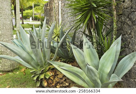 Garden with Agave and other plants - stock photo