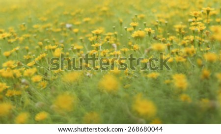 Garden with Bellis Perennis flower known as common daisy in blur style - stock photo