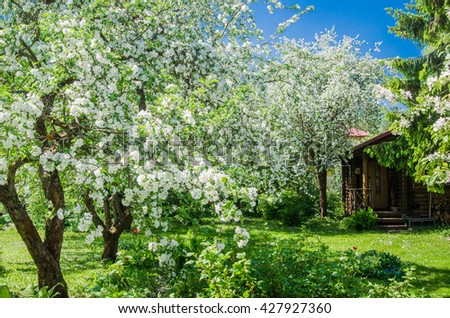 Garden with blossoming apple-trees, a spring landscape